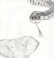 Snake and Elephant by LunaBelleHadley