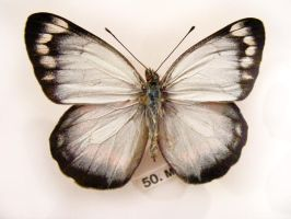 moths and butterflies stock129 by hatestock