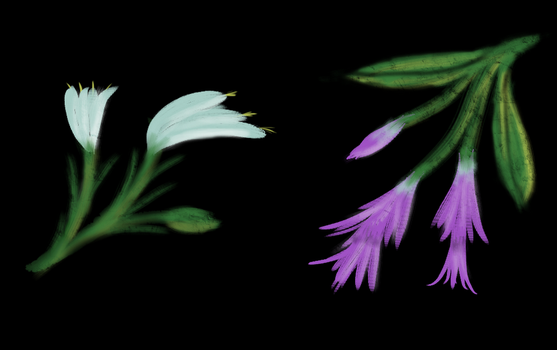 Lilly and Sobralia by scadl