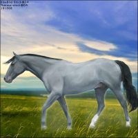 Blue Roan horse by midholly