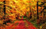 Autumn Forest and Landscape Wallpaper by ROGUE-RATTLESNAKE