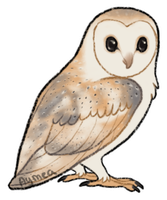 Barn owl by Aymea