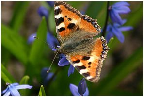 Flowers and Butterflies II by aare