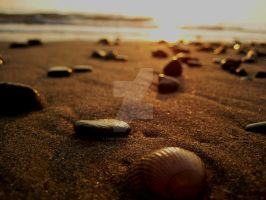 Macro Beach by Free-Minded-L