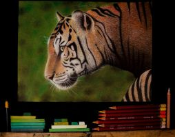 Bengal Tiger Pastel Drawing by CaseyNealArtwork