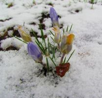 Winter's Last Stand by LovingLivingLife