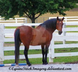 Quarter Horse 6 by EquineStockImagery