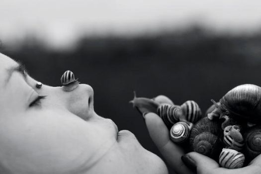 snails by freeminds