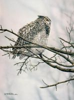 Great Horned Owl Study