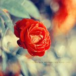bloody rose.. by addy-ack