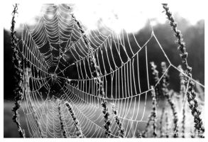 Spider Web 1999 by DennisChunga