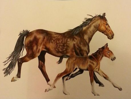 Mare and Foal Gallop by HeroJamesStar