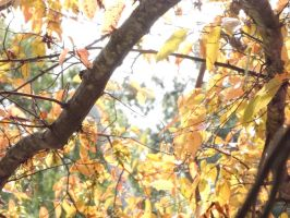 Branches of the Fall by GriffinPhillis