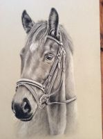 Charcoal pencil drawing by donnabe