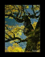 Branches by barns