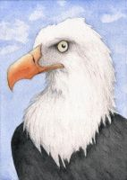Bald Eagle Watercolor by tursiart