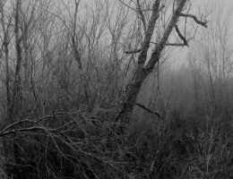 Into the mist... by thewolfcreek