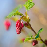 First spring blossoms by Frank-Beer