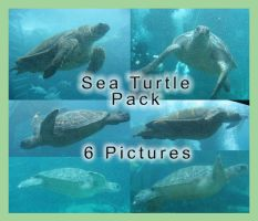 Sea Turtle Pack by GreenEyezz-stock