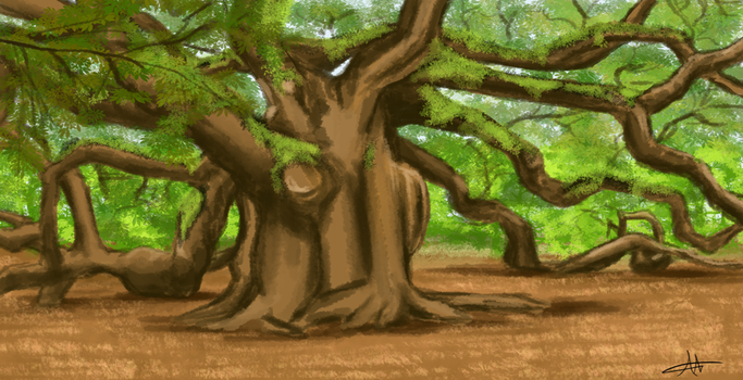 361 - Old Tree by Shasel