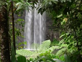 Natural frame for Millaa Millaa falls by DoodlebertDesigns