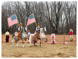 Breyer - Saddlebred Stars And Stripes by The-Toy-Chest