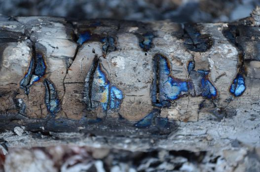 Birch log by Comeclarity1982