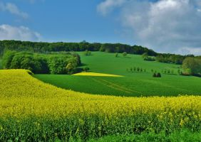yellow and green by Dieffi