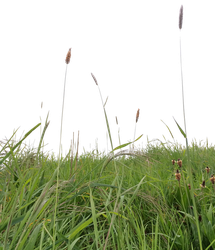 Grass2 by MindSqueeZe
