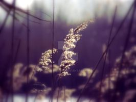 Glowing grass by MDGallery