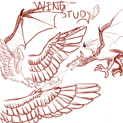 Wing Study by CheshireWolf97