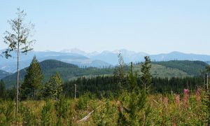 An August Hike 2012 by jewelslove