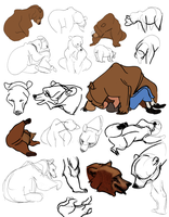 Bear Gestures by consoroza