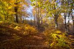 Golden Pathway by rembo78