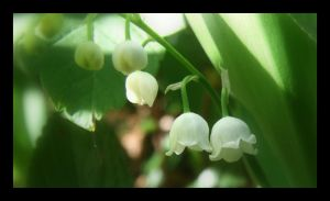 Lily of the Valley by Hocusfocus55