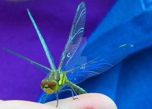 Dragonfly Magic