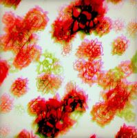 Roses by CheBertrand