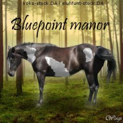 bluepointmanoravi by wsl30horselover10