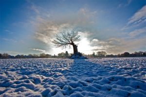 alone this winter by stuartreading