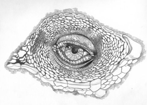 eye Sketch of Reptile by sonofwat2003
