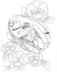 Beaver Skull and Pansie Flowers