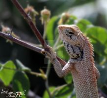 reptile by analysis230