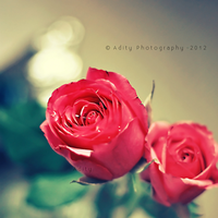 Valentine roses.. by addy-ack