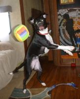 Lupin catching a ball by usedbooks