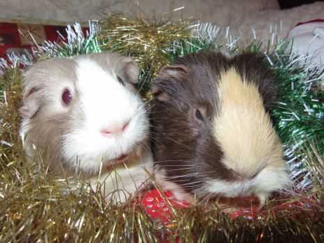 Peppa and Dolly Xmas photo by Candyfloss-Unicorn
