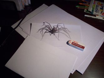 Spider on the desk by akan47