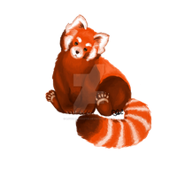 Red Panda by lovely-chaotic