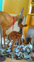 me and Bambi by Every1lovesMadeline