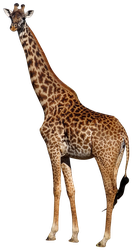 unrestricted hq giraffe 1 by aio350