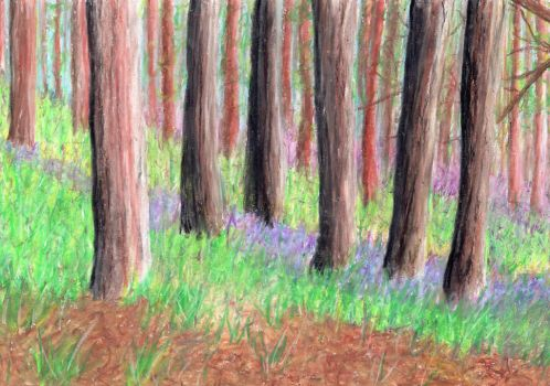 bluebell wood by rainbow-falls